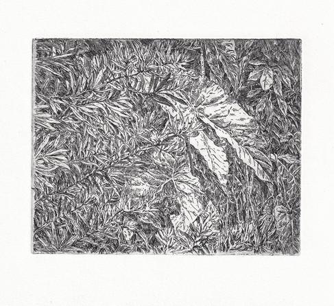 BOTANICKÁ ZAHRADA II. / čárový lept 12x10cm / 2017     Botanic Garden II. / etchings 12x10cm / 2017