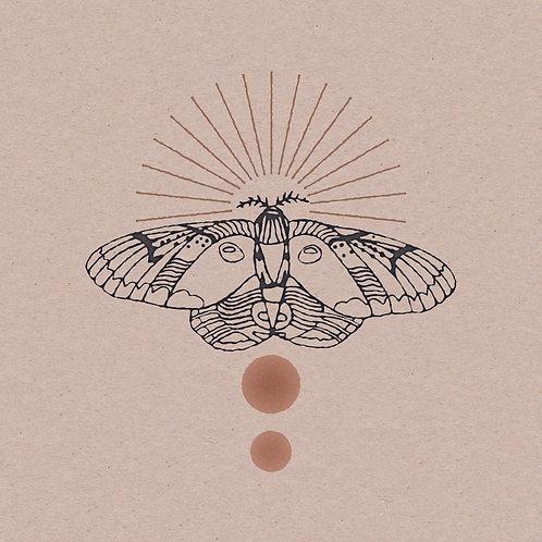Raccoon Moth 12 x 12 Print
