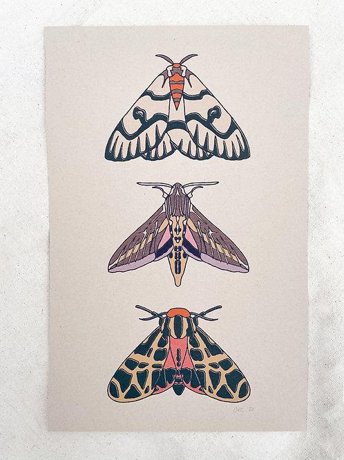 "Three Moths 11""x17""Print"
