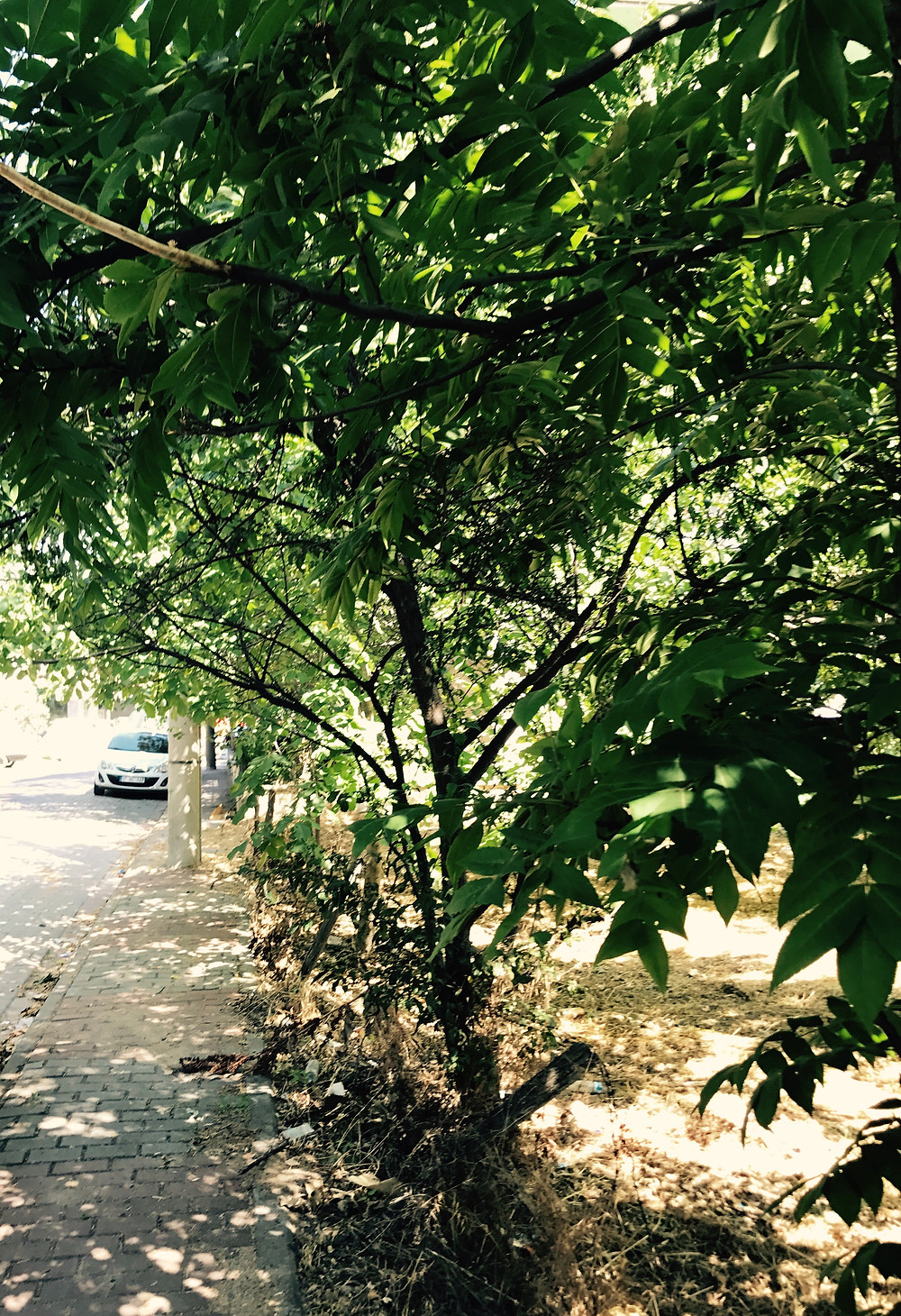 Street in The Artist's current city of residence, Çanakkale, Turkey