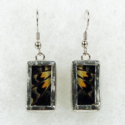 Xuthus Swallowtail