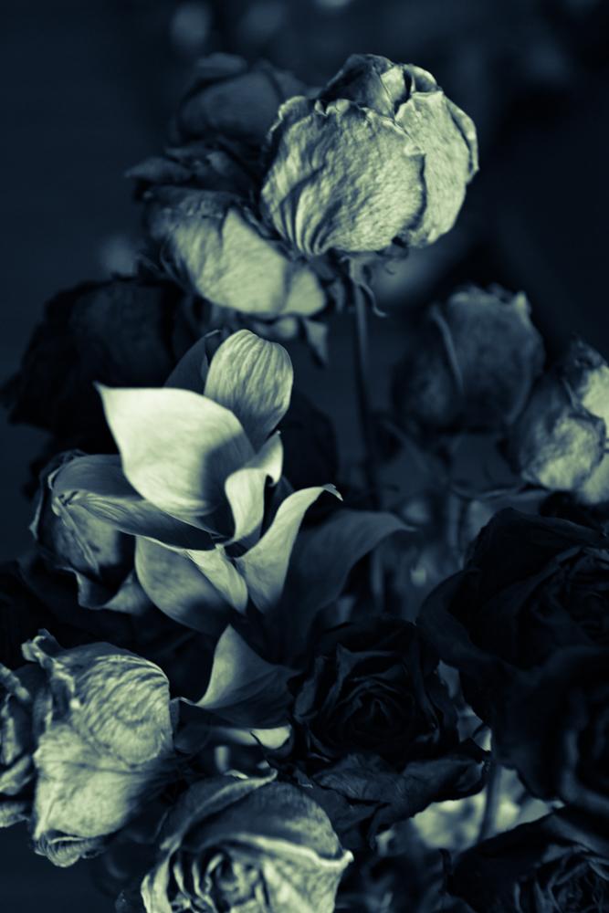 Split Toned Roses