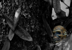 skull in the tree