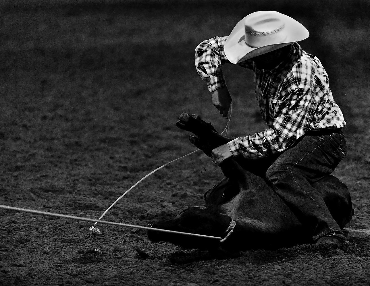 Rodeo calf Ropping