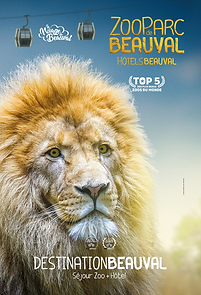 Beauval Lion 2019.png