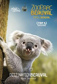 Beauval Koala 201.png