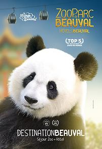 Beauval Panda 2019.png