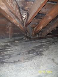 mold in attic.jpg