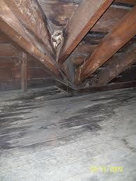 mold in attic.jpg