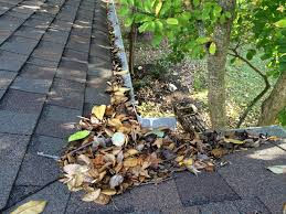 leaves on the roof 2.jpg