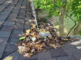 leaves on the roof 2.jpg