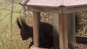 La ratatouille aux herbes bio du jardin enchanté