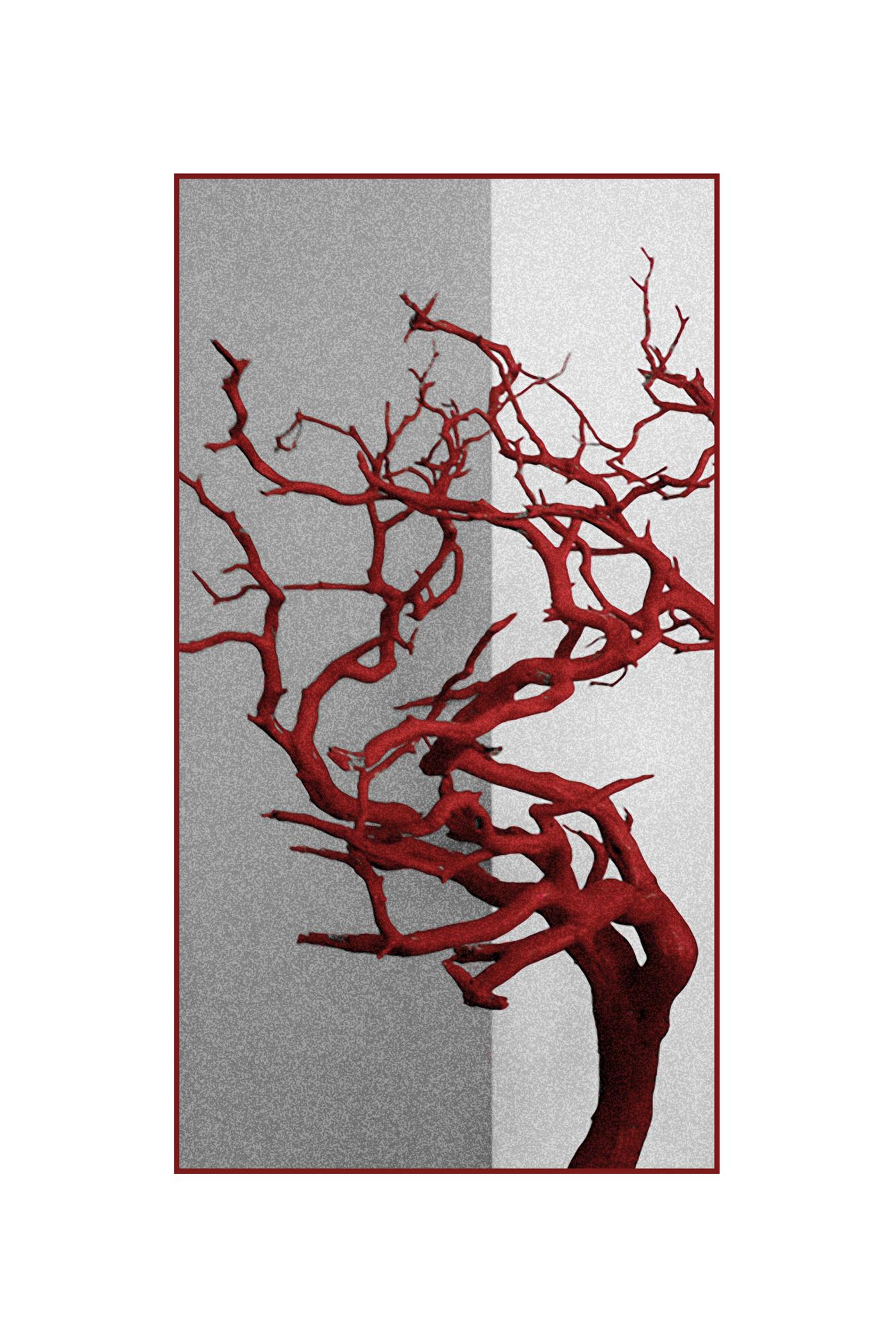 bonsai in red-Edit