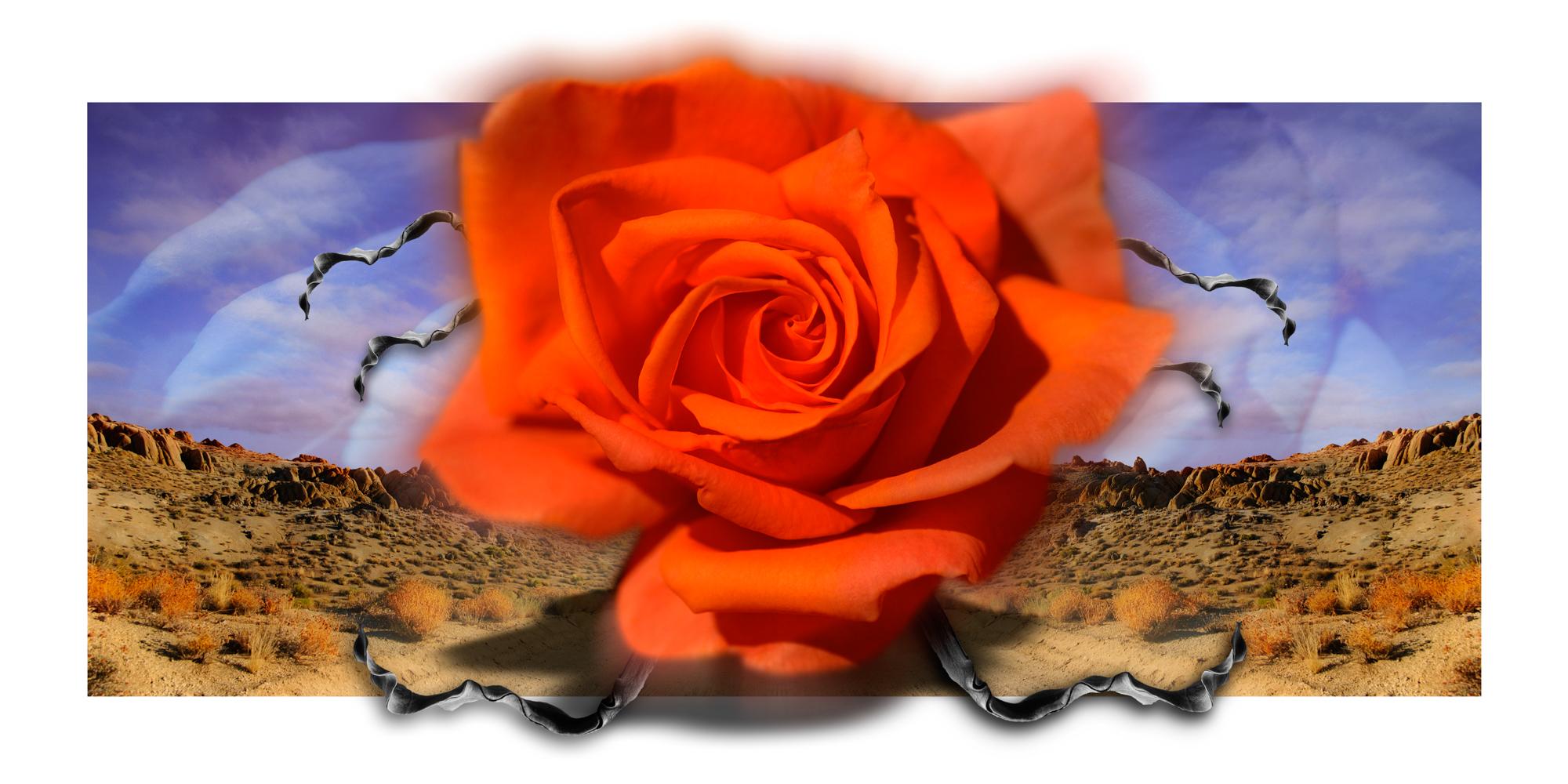 Alabama Hills Rose