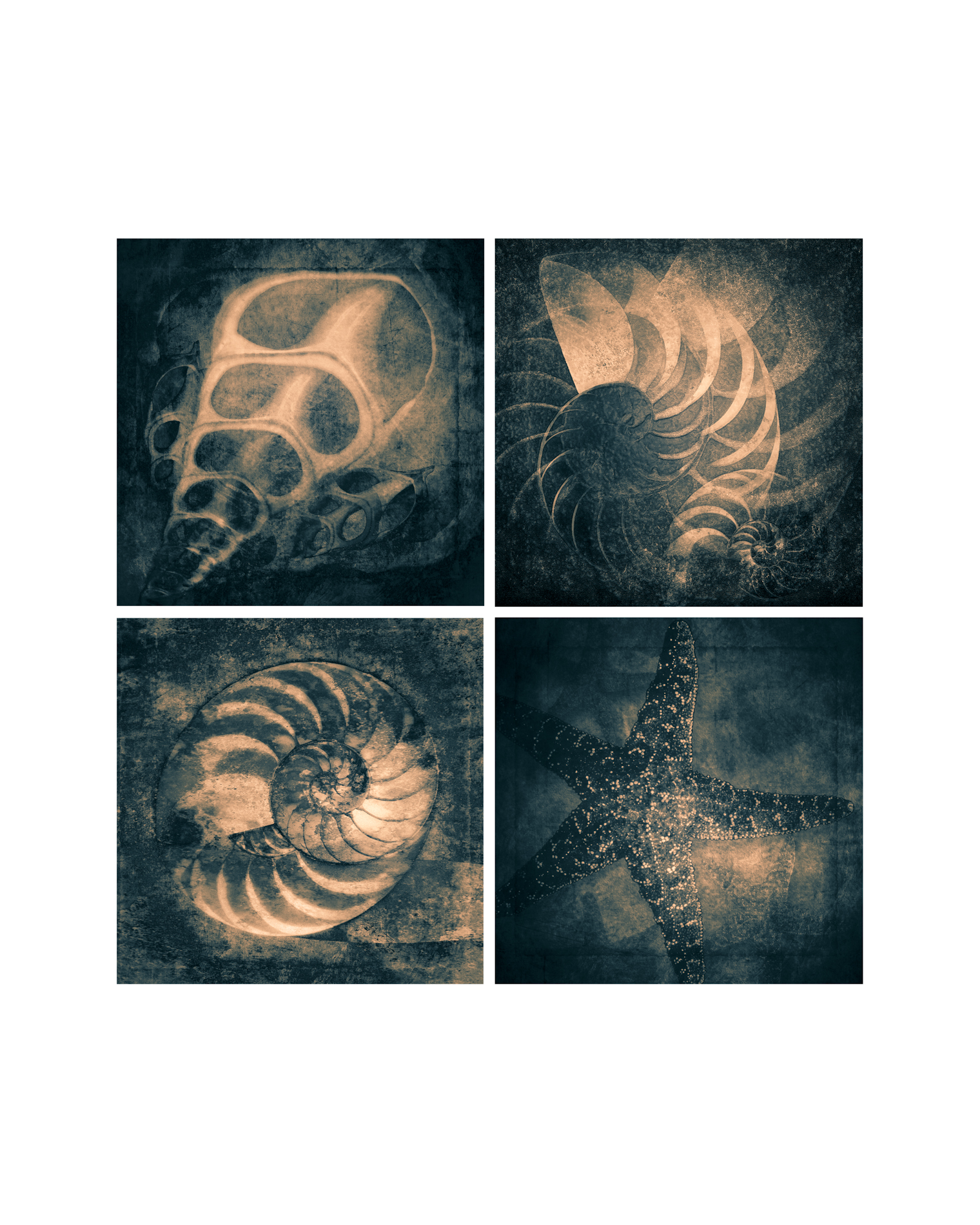 Four Shells