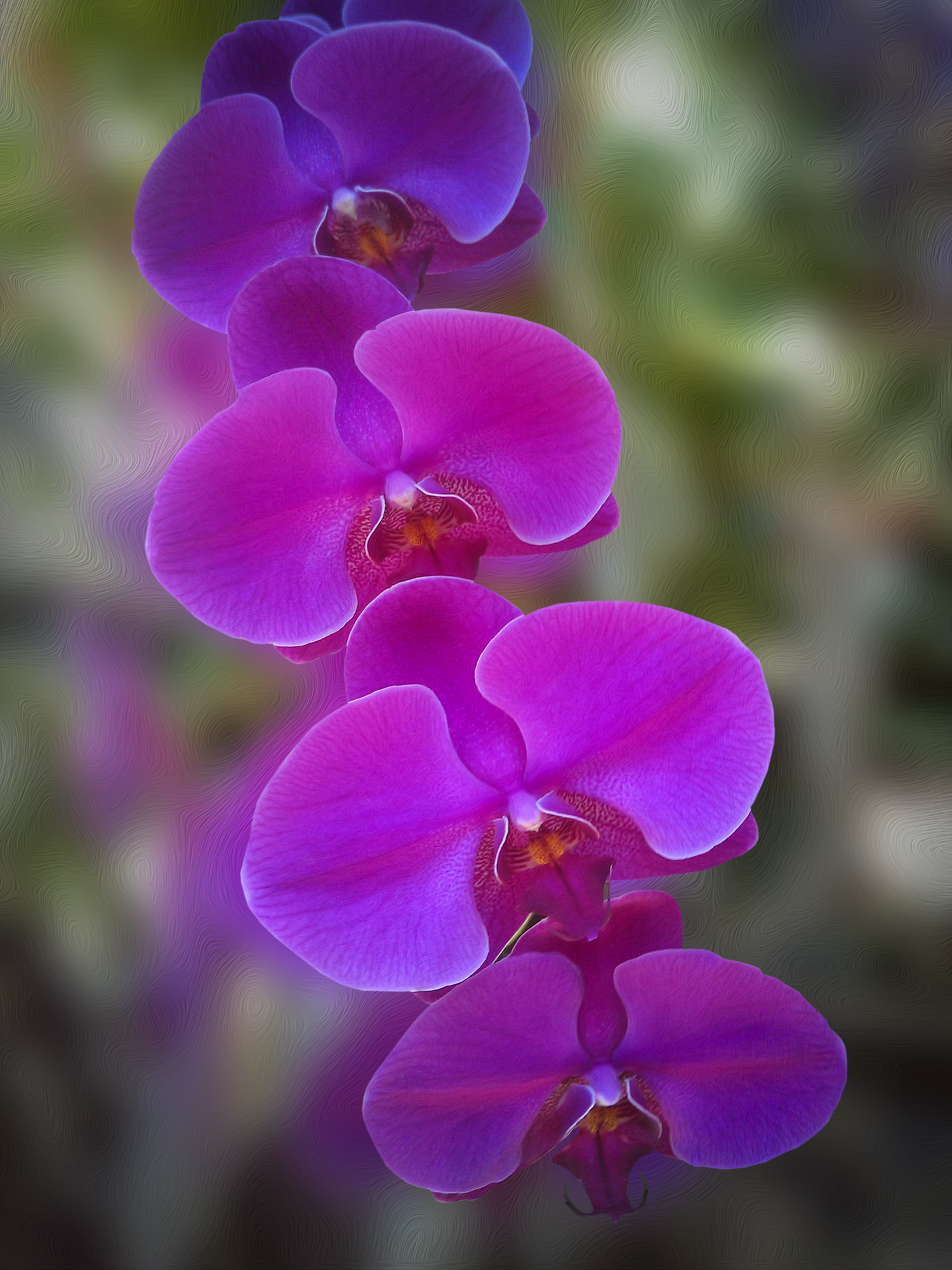ORCHID_0201