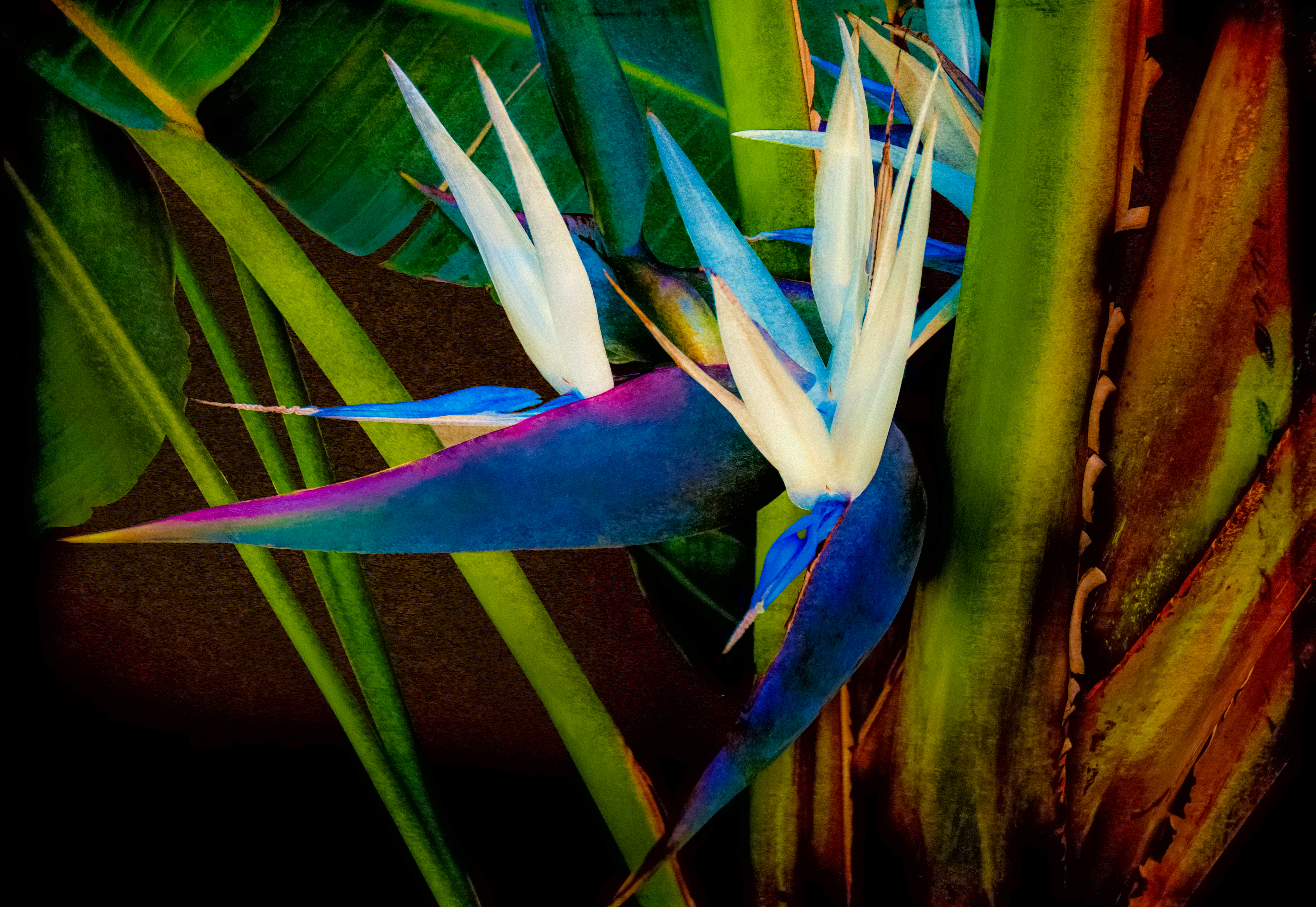 Two Birds In Paradise v