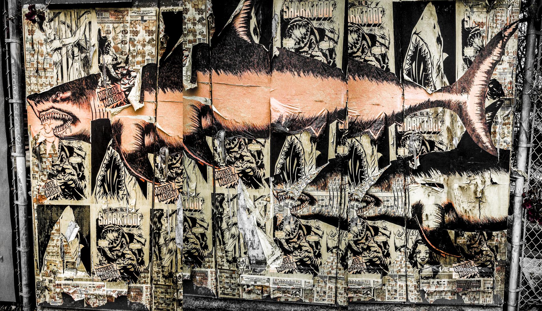 Bergamont Shark-EditBruce Burr - 1900x72