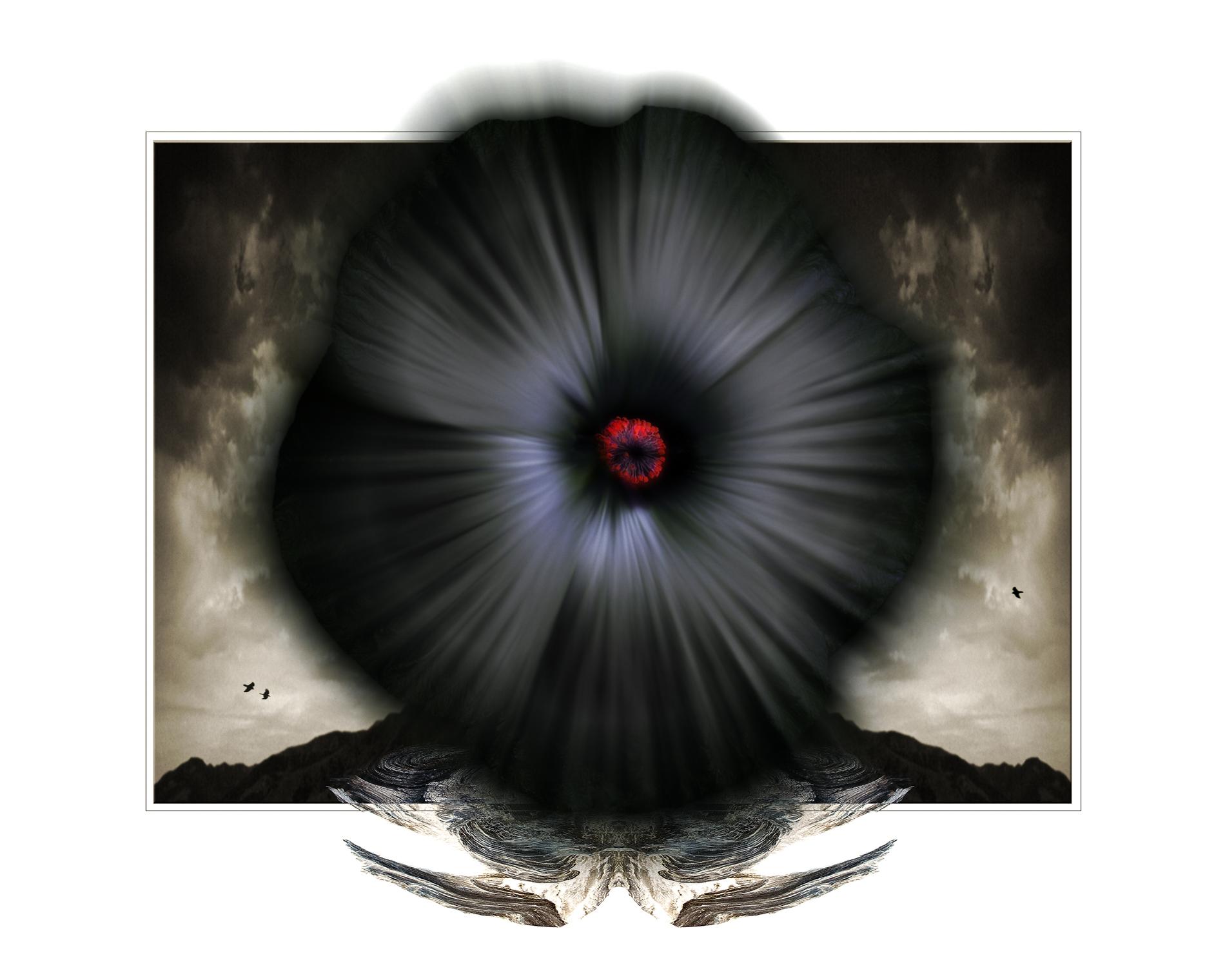 Black Hibiscus