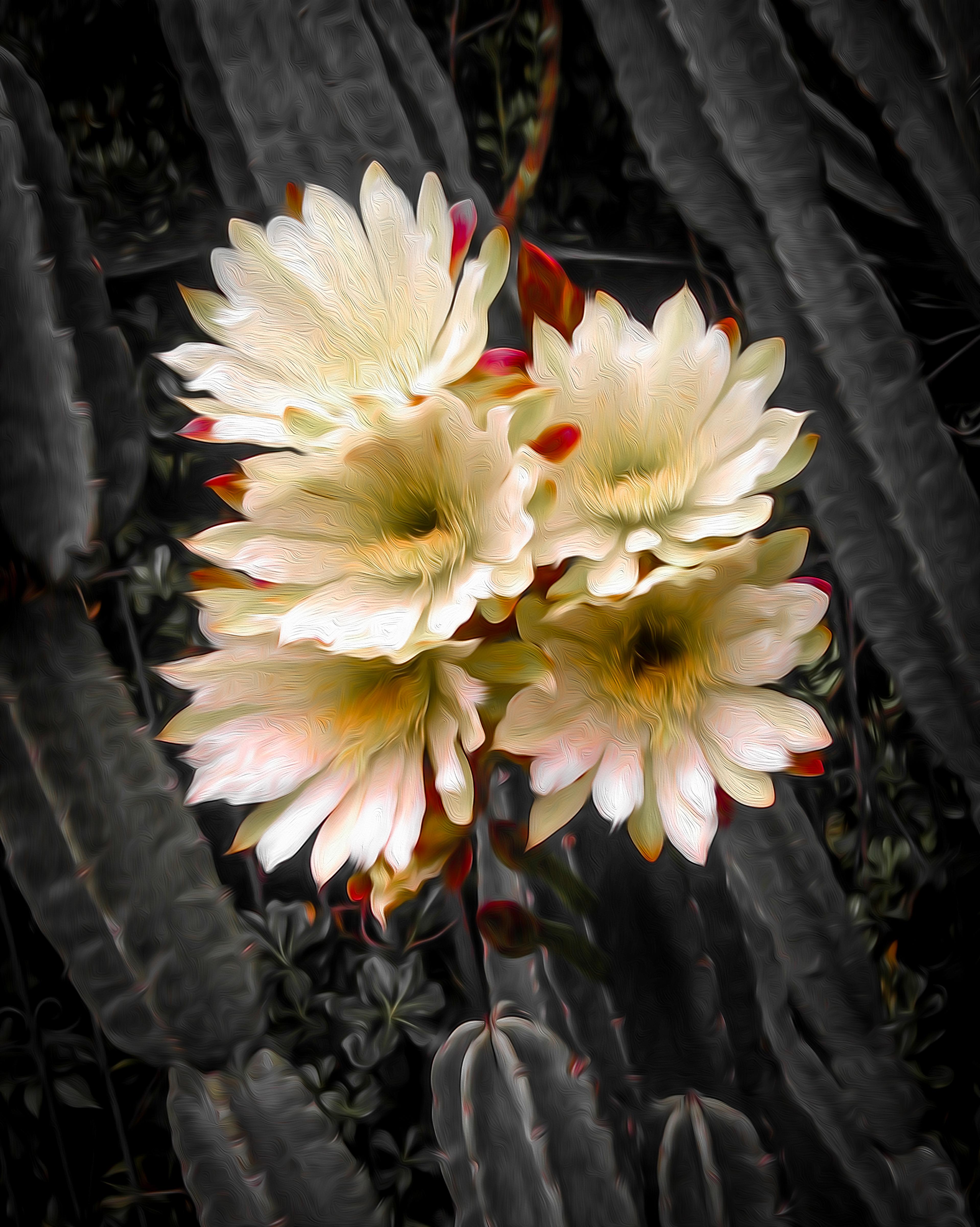 Stancrest Cactus Flower