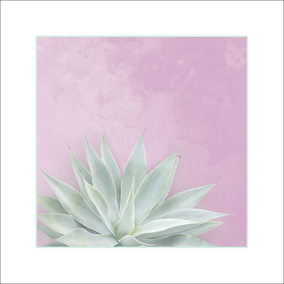 agave pink matte-10x10x96stroke