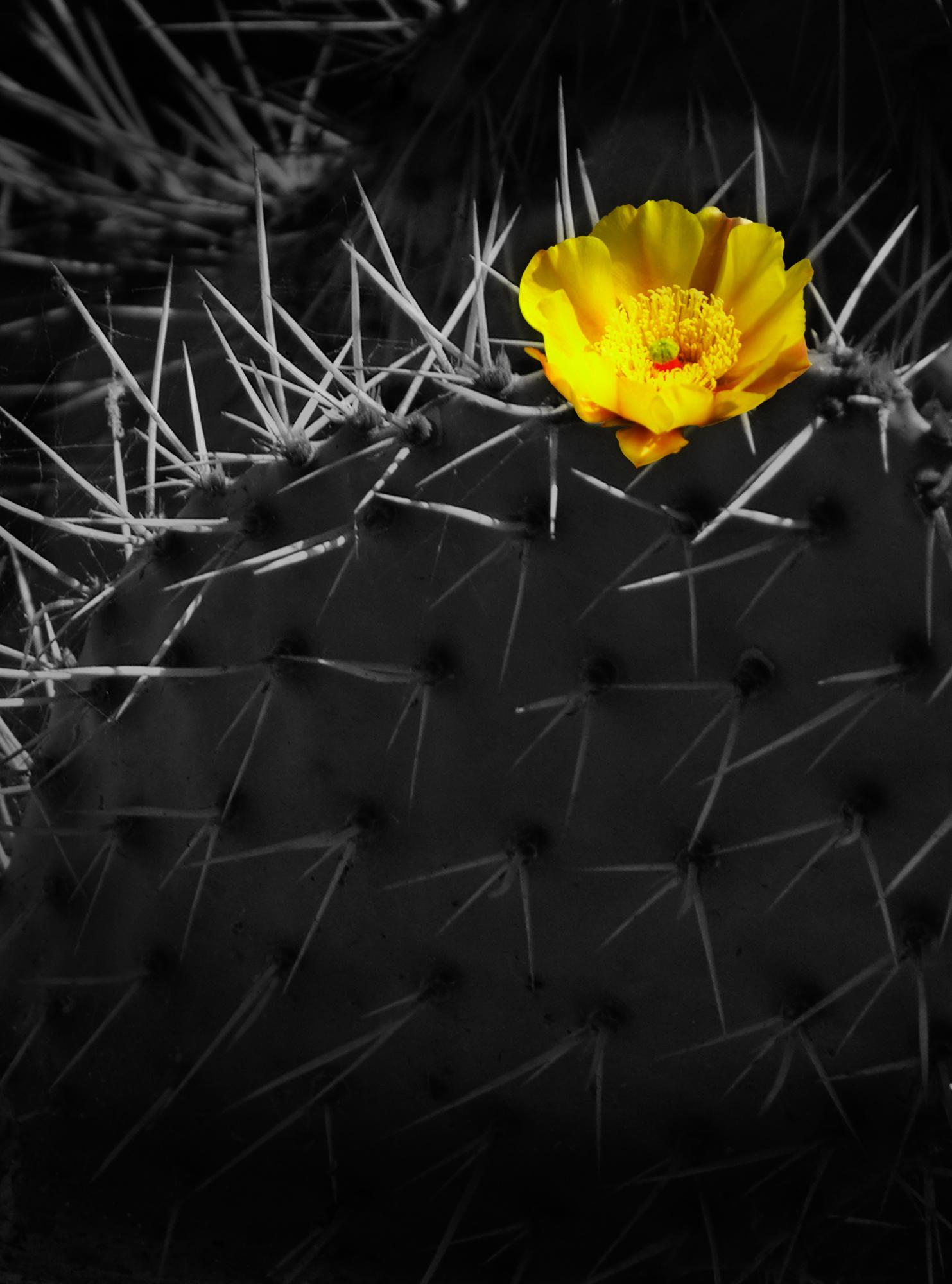 CactusFlower2