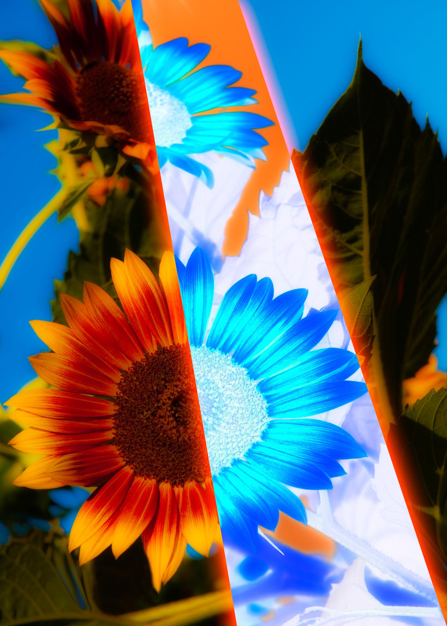 Sunny_Flower copy
