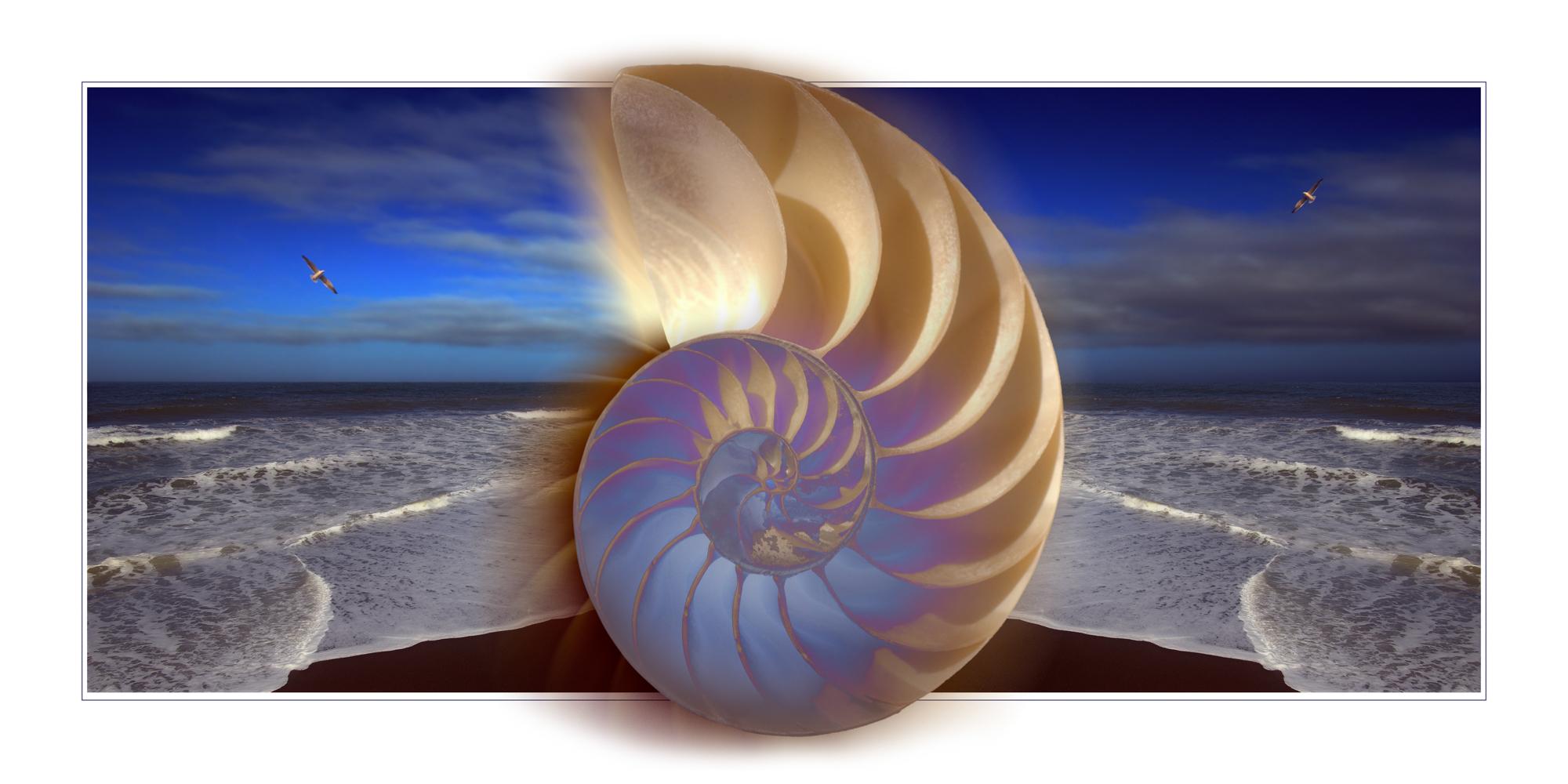 Nautilus Waves