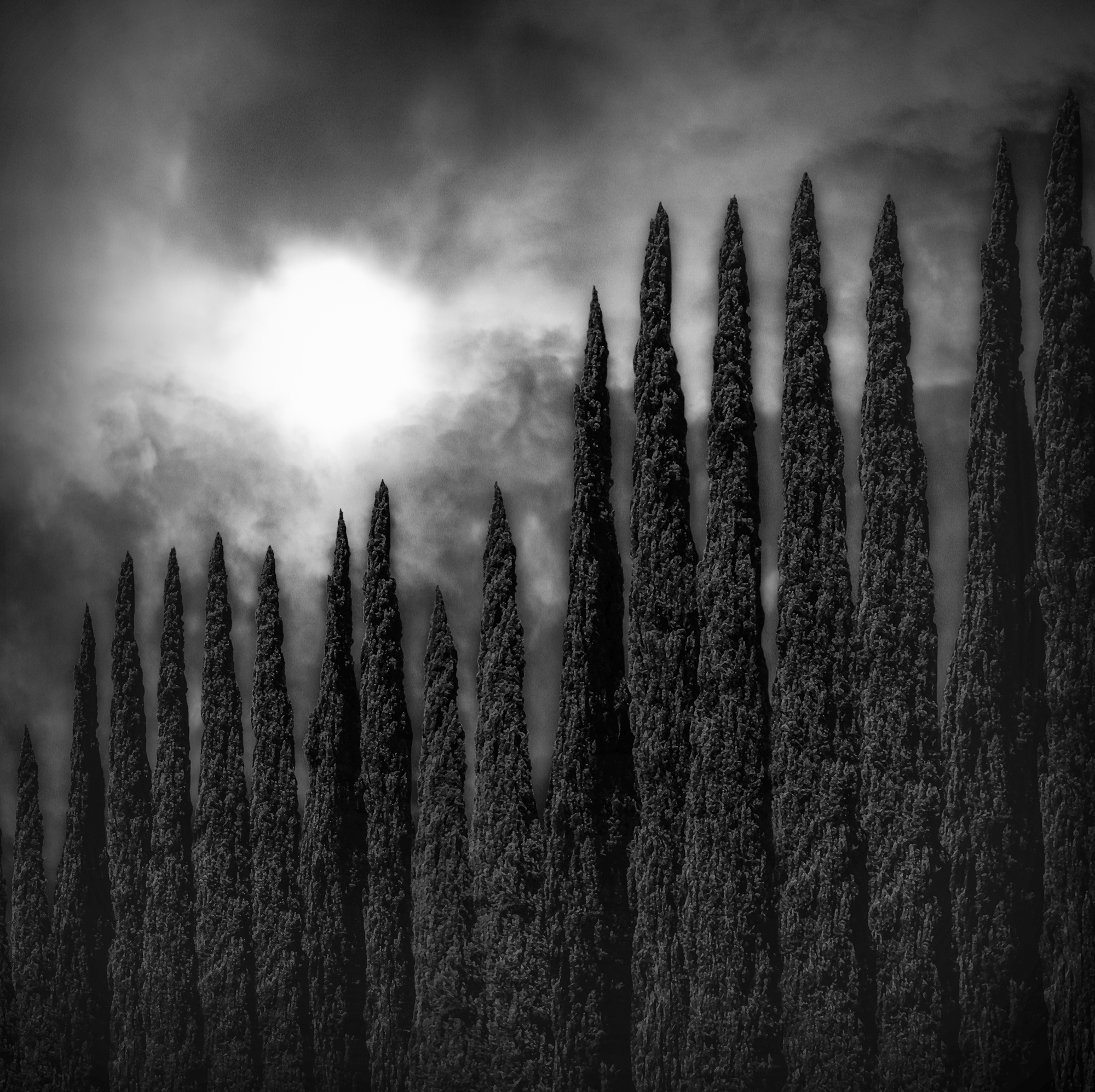 Looking-Up-I-Fell -Into-The-Cypress-Sky.