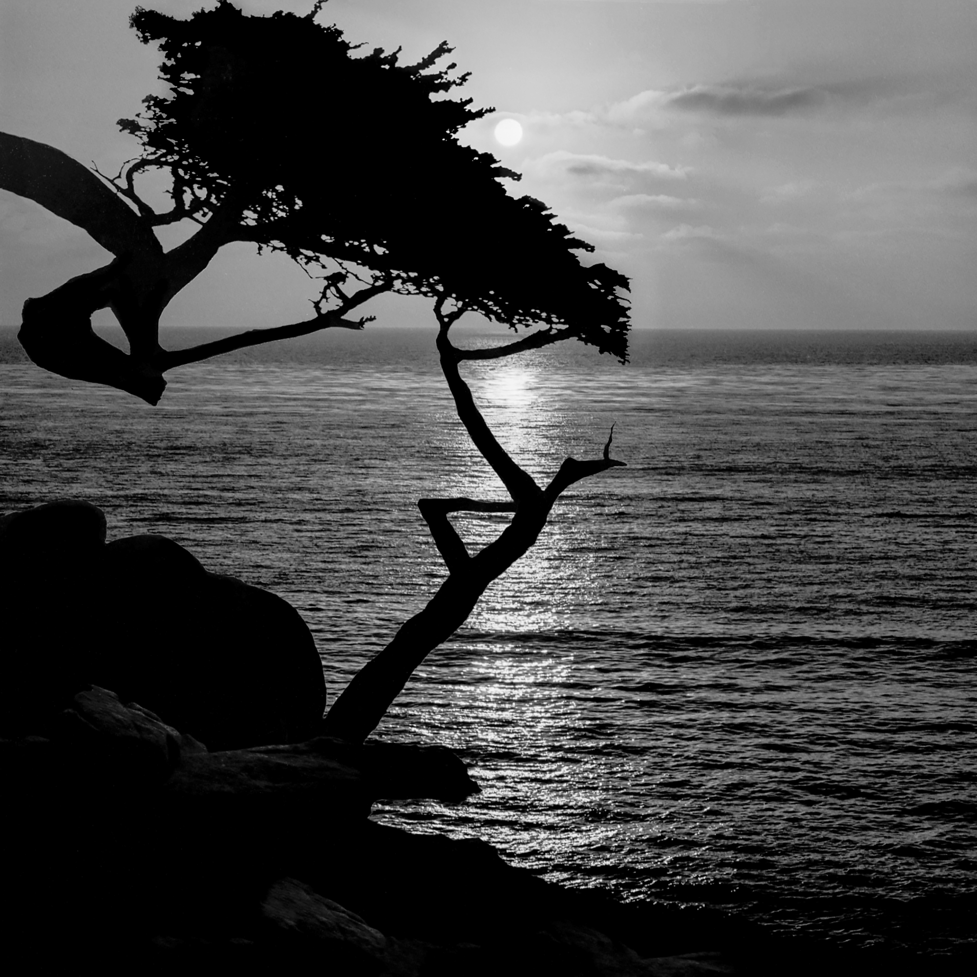 Lone_Cypress-moonlight