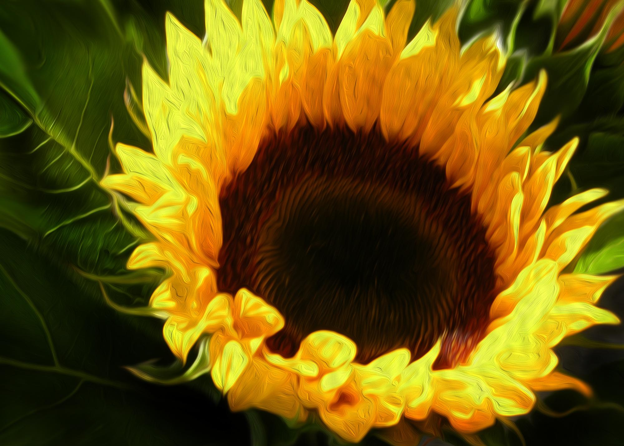 il_fiore_del_sole-v2