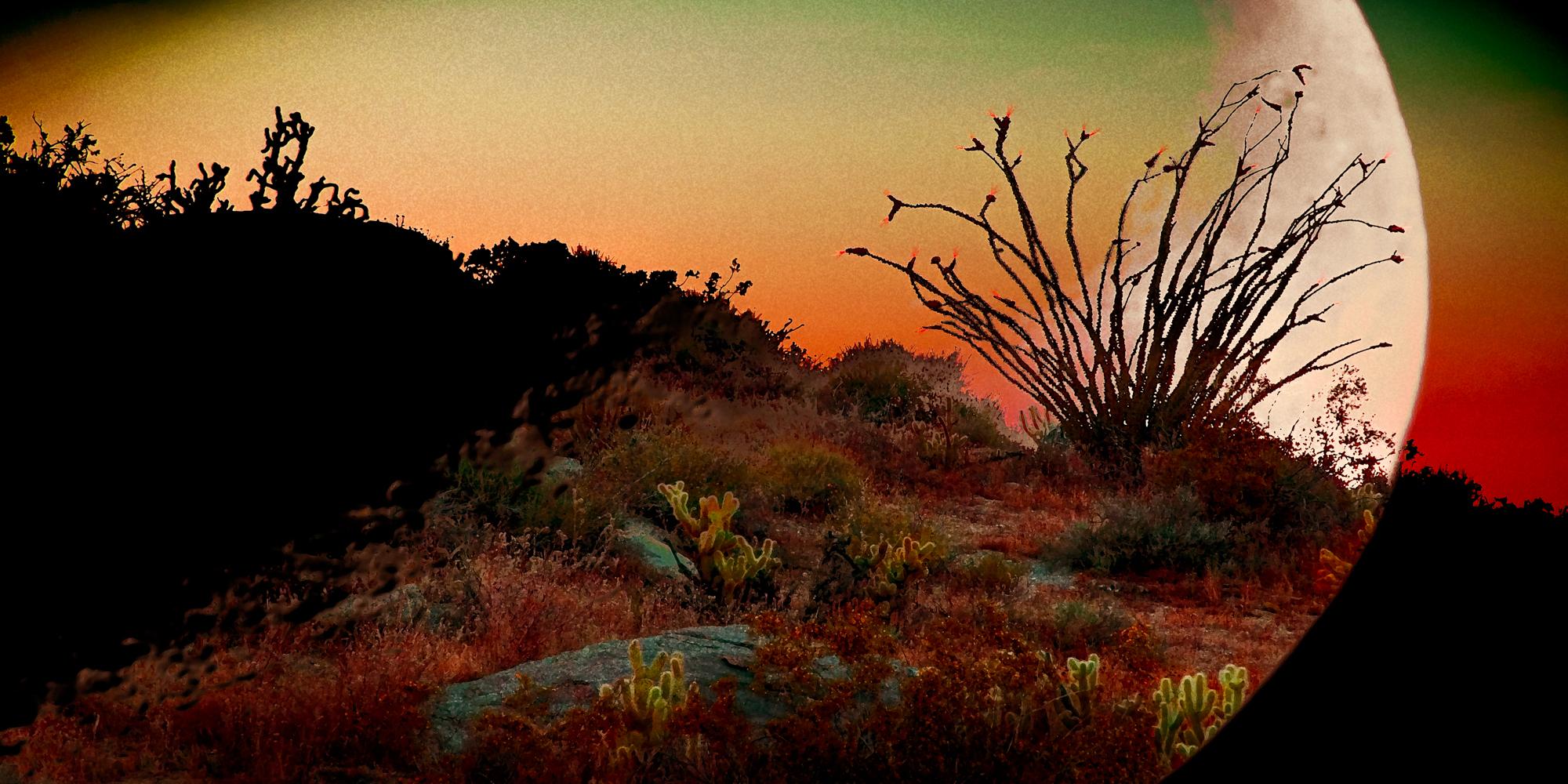 ANZA Desertscape