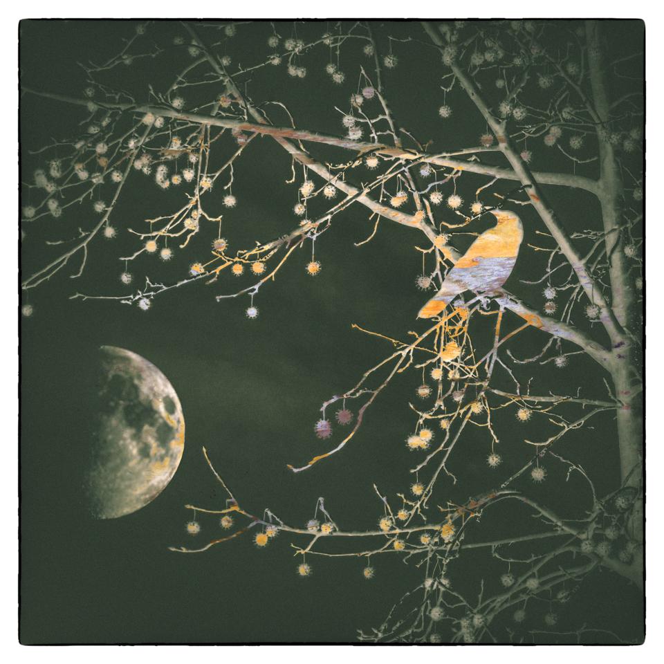 Blackbird Moon
