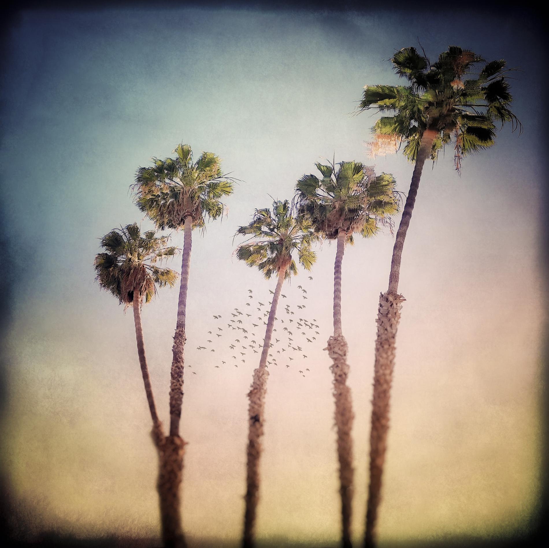 five palms v4