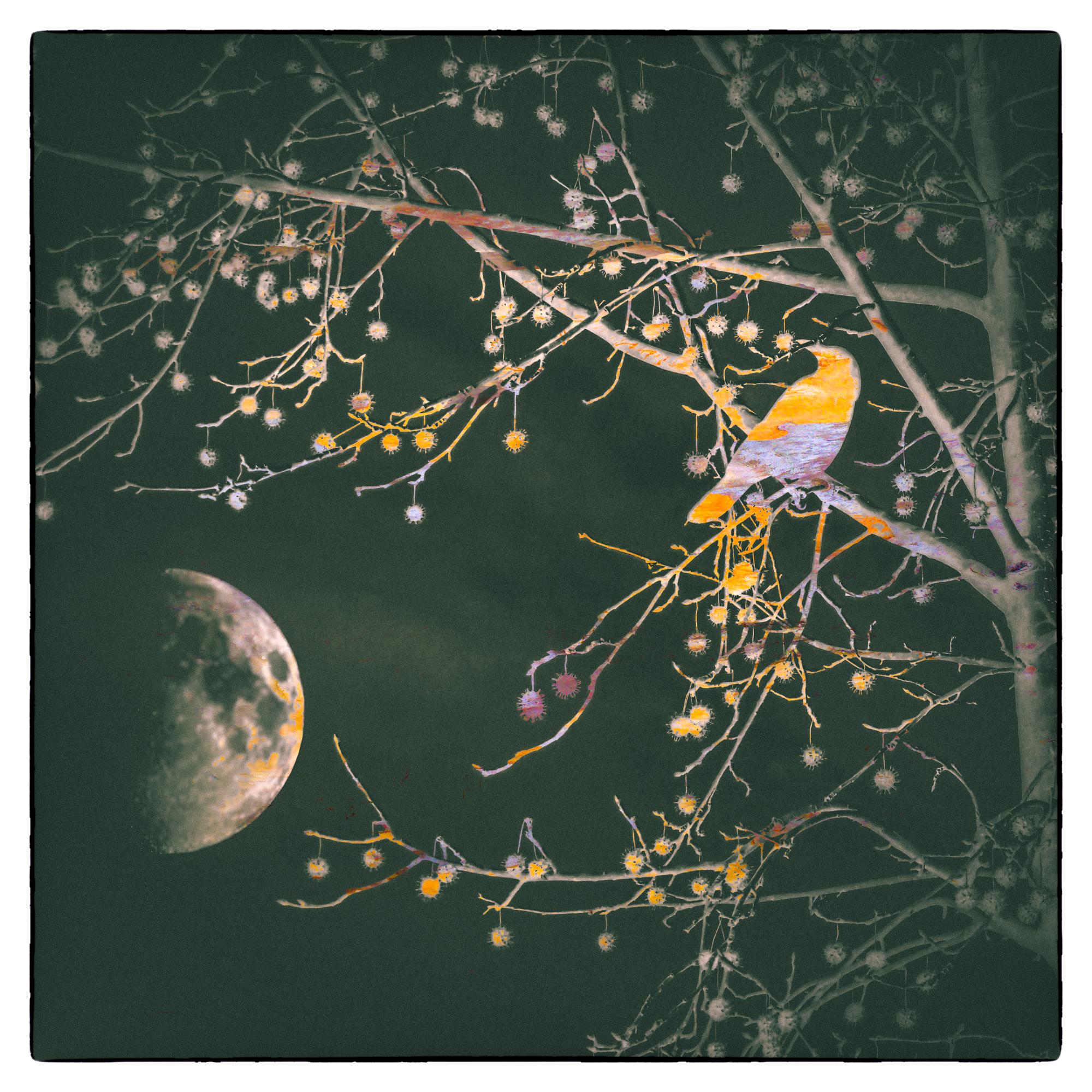 Blackbird Moon-2