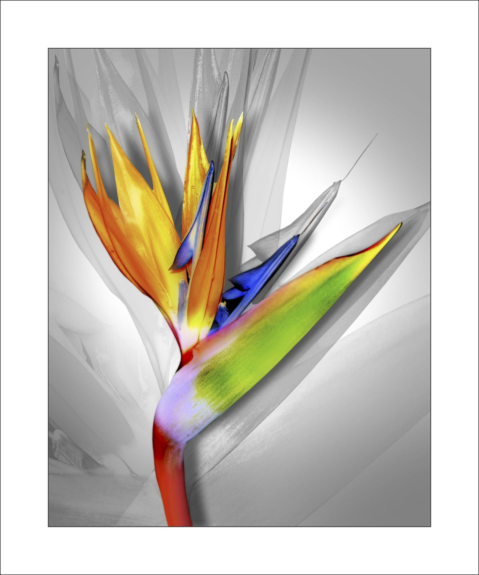 Wild Bird V2 stroke