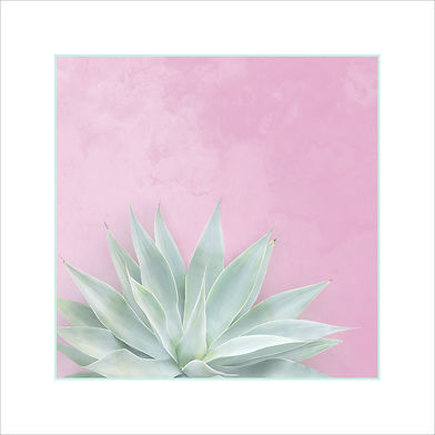 agave pink matte.jpg