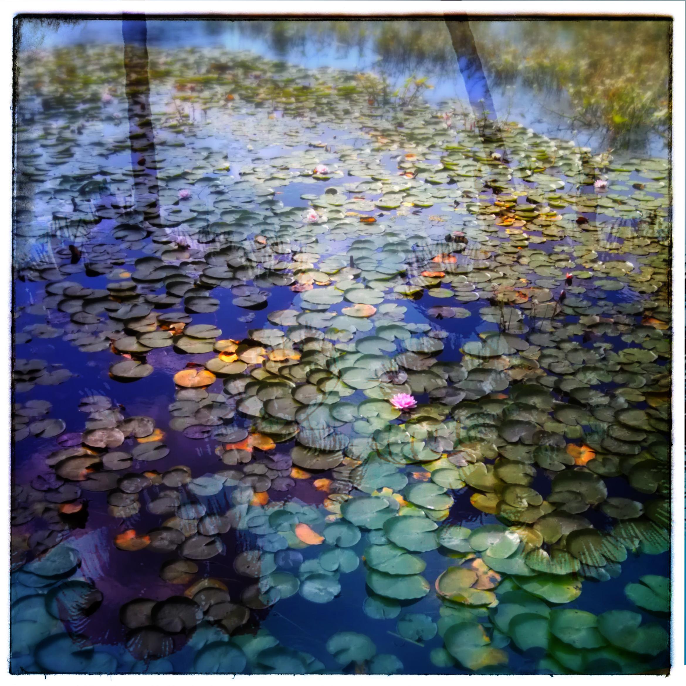 Echo Park Lake, Los Angeles CA
