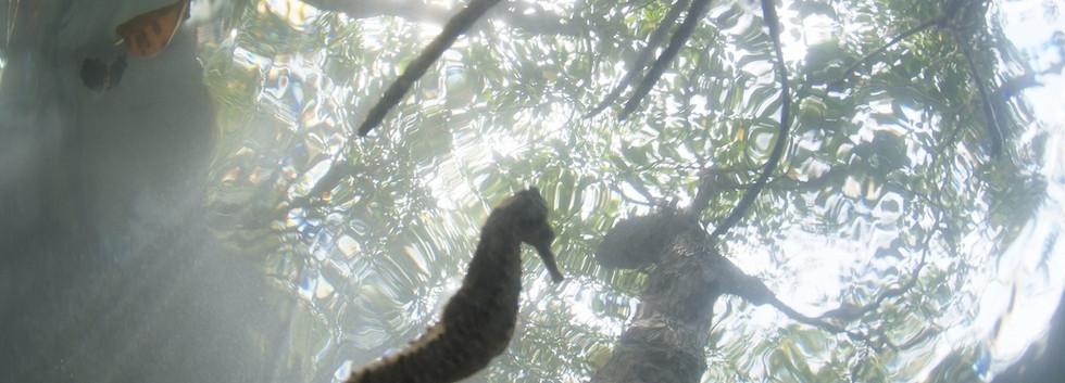マングロープ