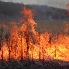 04-20-21 neighbors CRP burn BG
