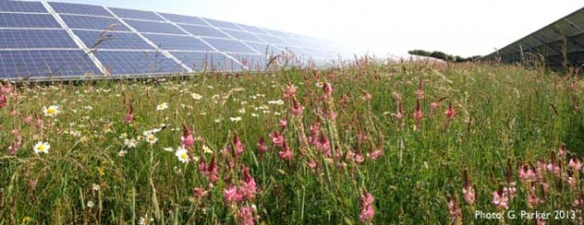 Solar-prairies.jpg