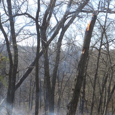 next day, woods still burning BG