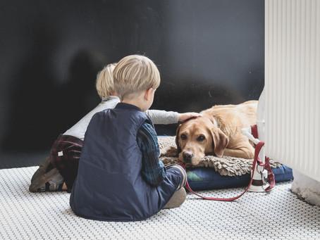 5 beneficios de la Terapia Asistida con Perros