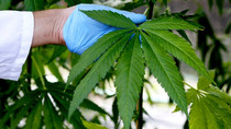 Why recreational cannabis users may benefit from taking CBD