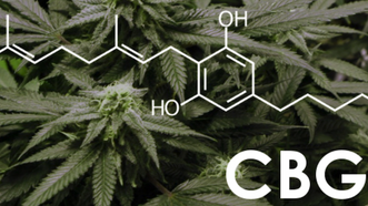 New Study: CBG Cannabinoid Works As Appetite Stimulant