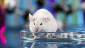 Priešvėžinių vakcinų veiksmingumas gydant metastazes pelių modeliuose