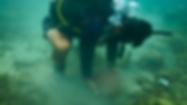 Coral Transplant Detatchment.png