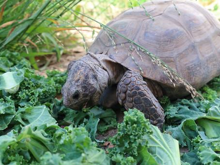 Tortoise-Spot 2020