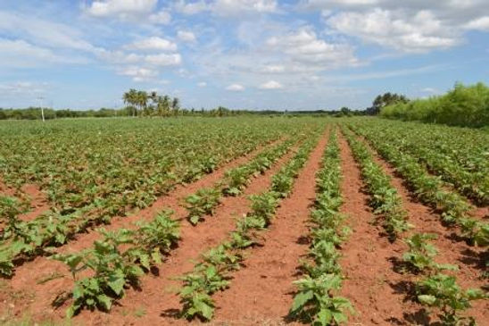 agriculture diologique inde OFI