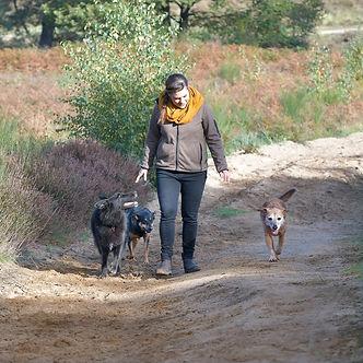 dogwalk_DSC3485_2.jpg